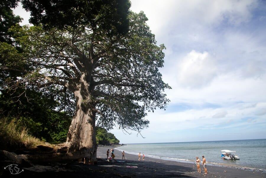 Baobab et plage de sable noir_Mayotte