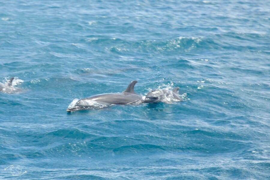 Dauphins à Mayotte