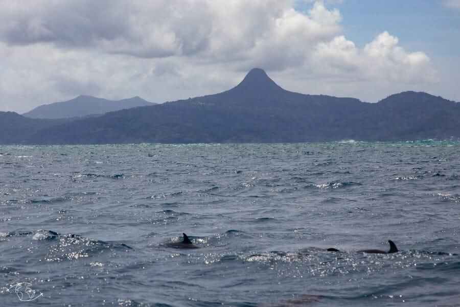 Dauphins devant le Mont Choungui - Mayotte