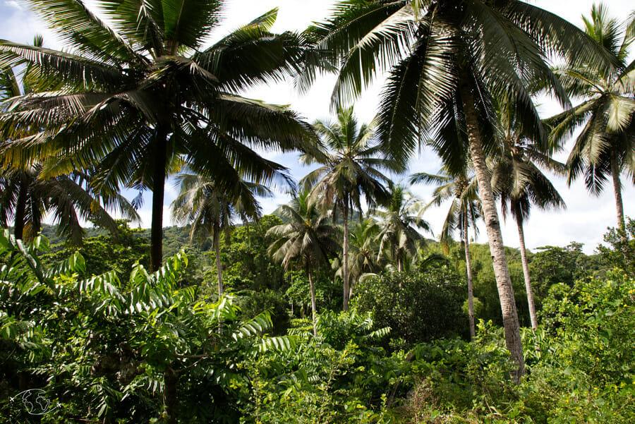 Jardin d'Imany - Visiter Mayotte