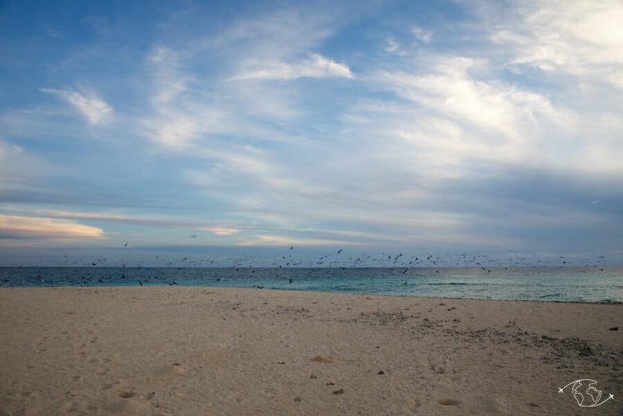 Nué d'oiseaux sur l'îlot de sable blanc