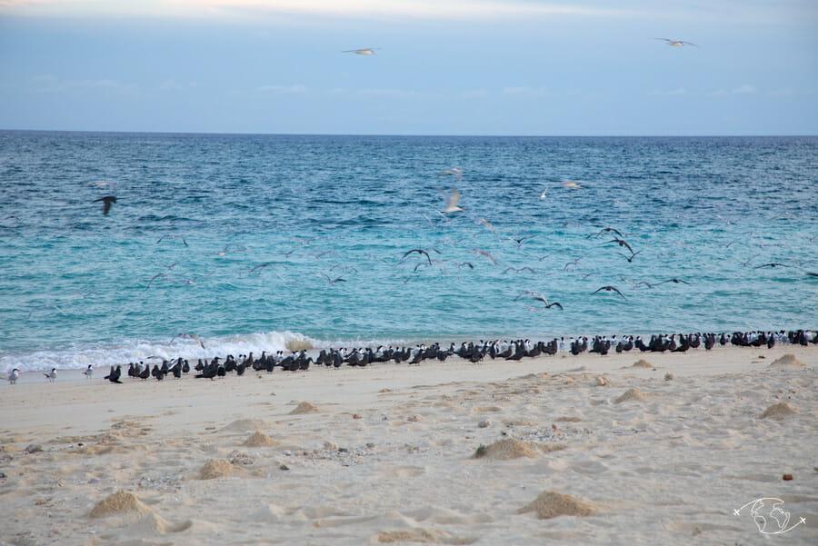 Oiseaux sur l'îlot de sable blanc - Mayotte
