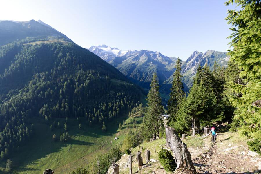 Montée dans la forêt au dessus du Col de la Forclaz - Tour de la Vallée du Trient