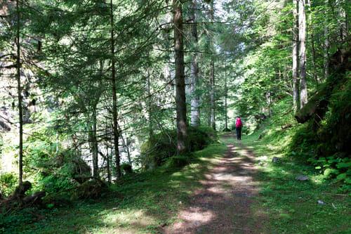 Sentier dans les bois après la Crêta - Vallée du Trient