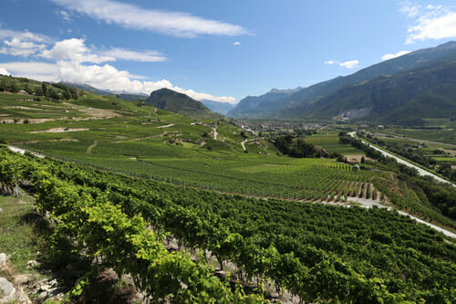 Bisse de Clavau - Vue sur les Vignes