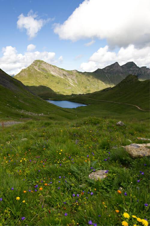 Lac Vert et fleurs multicolores - Randonnée à Champéry