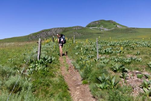 Chloe sur le sentier de la Boucle du Sancy - Randonnée Puy de Dôme