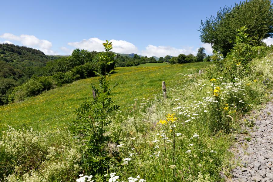 Entre Courbange et Besse-en Chandesse - Boucle du Sancy - Randonnée Puy de Dôme