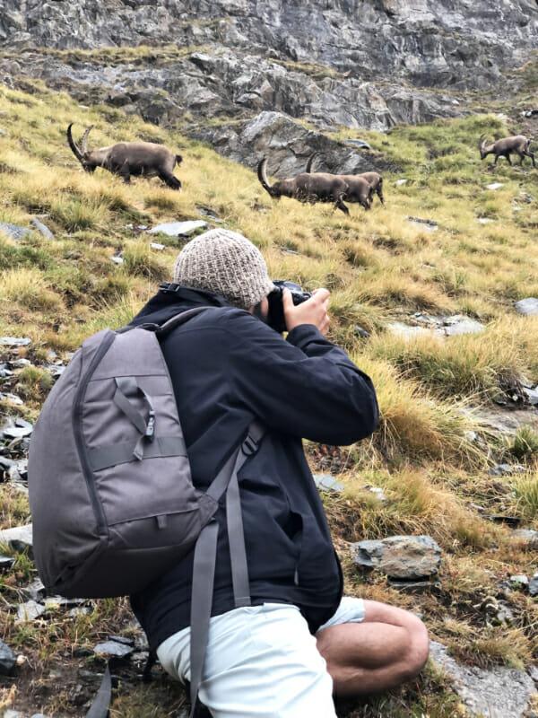 En plein action _ Parc Gran Paradiso _ Salva Fauna Tours