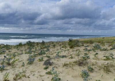 Dune de la Plage d'Arna - Naturisme
