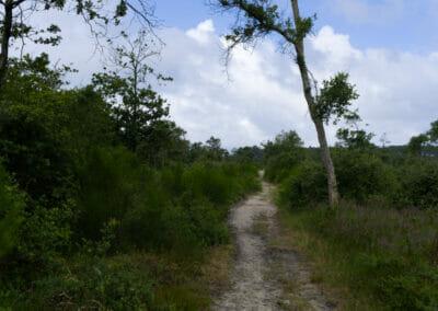 Sentier du Courant d'Huchet 1