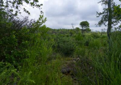 Sentier du Courant d'Huchet 10