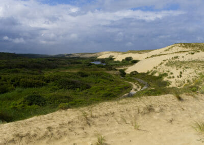 Sentier du Courant d'Huchet 2