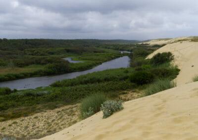 Sentier du Courant d'Huchet 4